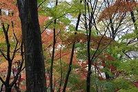 2014.11.14 15  福井 033.JPG