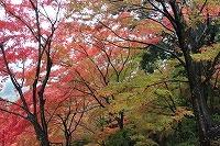 2014.11.14 15  福井 053.JPG