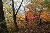 2014.11.14 15  福井 024.JPG