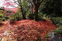 2014.11.14 15  福井 079.JPG