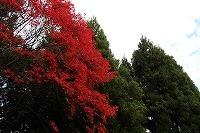 2014.11.14 15  福井 089.JPG