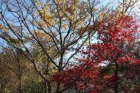 2014.11.19 123.JPG