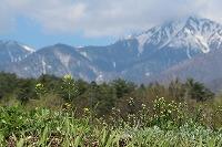 2015.4.22 23  安曇野 152.JPG