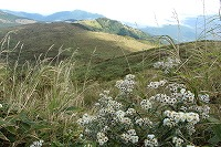 2015 9月 車山高原 飛鳥 138.JPG