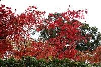 2015.11.13 京都 004.JPG