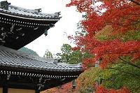 2015.11.13 京都 029.JPG