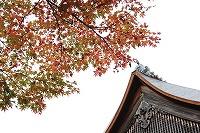 2015.11.13 京都 066.JPG
