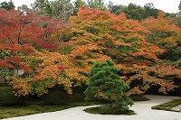 2015.11.13 京都 072.JPG